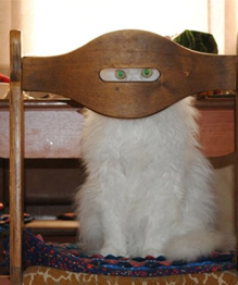 Ghost cats that no one can see
