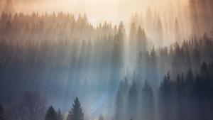Beauty of foggy mornings