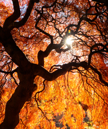 The autumn colour palette