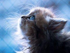 Провинциальный коллектор обезглавил котенка за долг по микрозайму