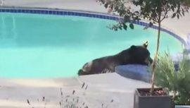 """Медведь прошел """"курс гидромассажа"""" в джакузи канадской пары. Видео"""