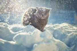 зима, кот, снег