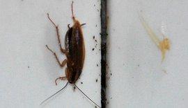 В Чехове в котлеты запекают тараканов