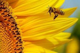 Пчела заставила экстренно приземлиться британский самолет