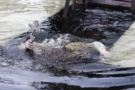 Крещение, прорубь, купания