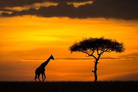 Африка, восход солнца