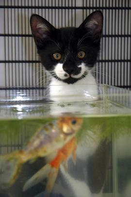котенок, рыбка