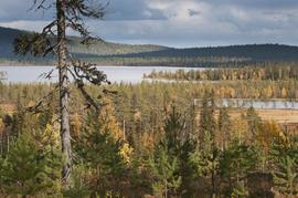 Финляндия, озеро, природа, деревья