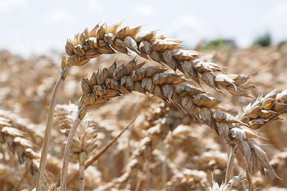 Grâce aux sanctions la Russie affiche un surplus dans l'agroalimentaire