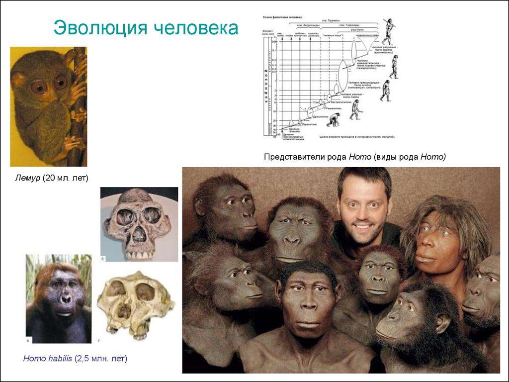 Как эволюционисты сели в лужу?