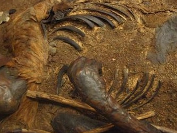 """Почему сфагновые болота называют """"кладбищем органов""""?"""