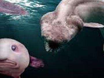 Какие подводные жители самые необычные?