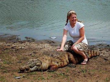 Как крокодилы в Новгород ходили