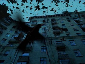 Откуда берутся злые птичьи стаи?