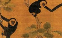 В китайской гробнице обнаружены останки обезьяны неизвестного вида