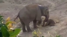 Слон затоптал человека до смерти. Тот бросал в животное камнями