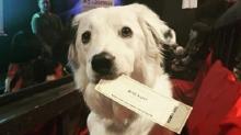 Кинотеатр США позволяет присутствие собак на сеансе