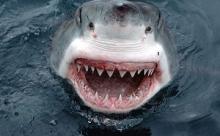 100 лет назад США терроризировали...акулы