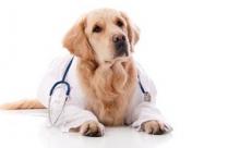 Собаки способны диагностировать рак?
