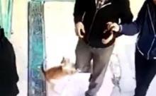 В Турции кошка набрасывается на мужчин, сидя неподвижно несколько часов