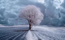 1816 - как зима продлилась целый год