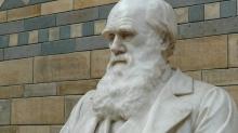 Дарвин ел жуков, ходил в школу богословия, а его отец разочаровался в нем