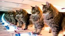 Китайские специалисты клонировали кота