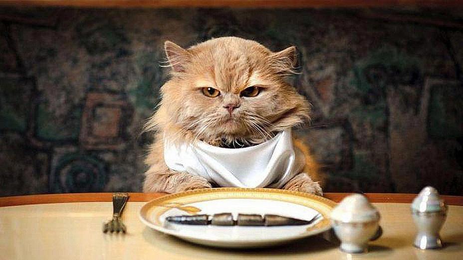 Подходит ли вам ваше питание?