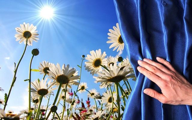 Один цветок может изменить мир