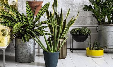 Растения с которыми надо вместе жить