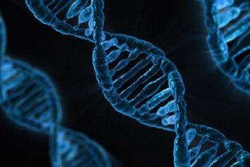 Ученые научились редактировать ДНК внутри матки