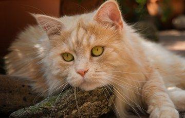 День кошек - 1 марта!
