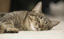 Муся - любимое кошачье имя россиян