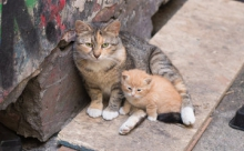 Закон, который спасёт кошек