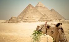 В Египте за объятия с женихом могут отчислить из Университета