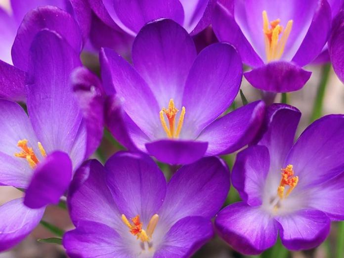 Как найти свой цветок