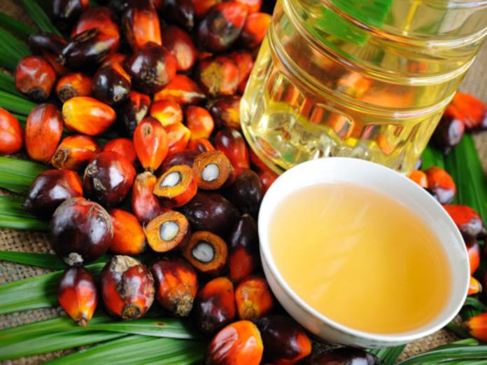 ВОЗ: производство пальмового масла  -  угроза здоровью и экологии