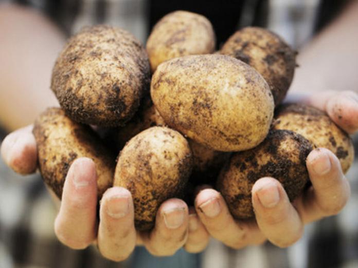 Неожиданная польза картофеля