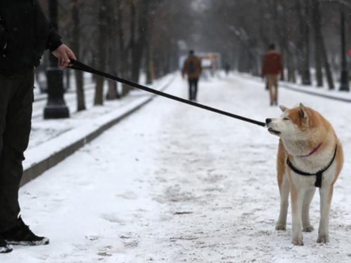ВНИИ паразитологии в России: прогулки с собаками могут нести смертельную опасность