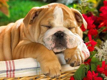 """Исследователи обнаружили """"гены любви к собакам"""""""