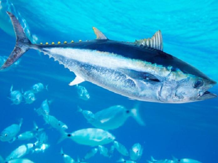 Виды рыбы, которые не стоит есть
