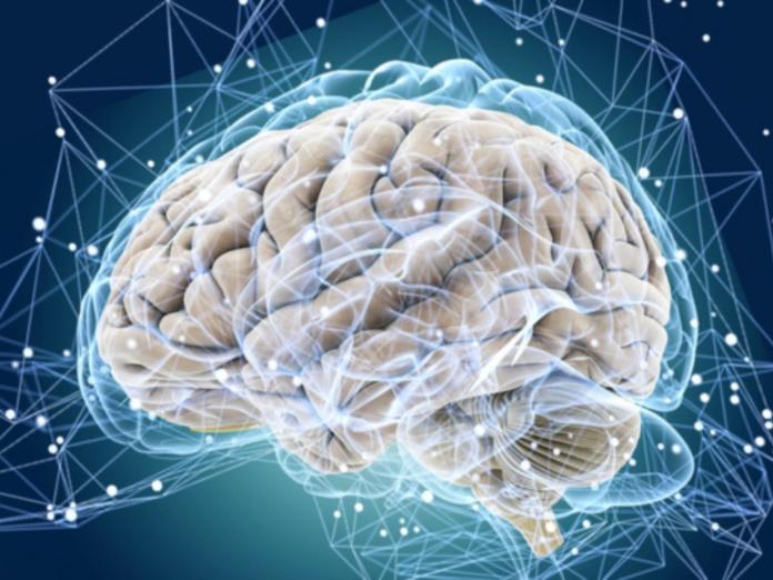 Исследователи: чаще стресс - меньше мозг