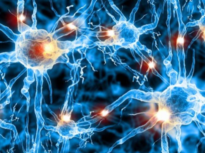 В России разработали нейросеть для поиска метастазов рака