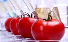 Пять мифов о ГМО