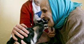 Собаки москвичей питаются лучше, чем пенсионеры в провинции