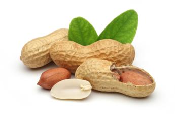 Британские ученые победили аллергию на арахис