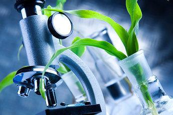 Три лечебных растения, имеющих успех в науке