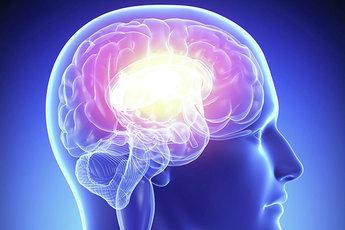 Человеческий мозг взрослеет к 30 годам