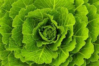 Зеленые листовые овощи предупреждают жировой гепатоз