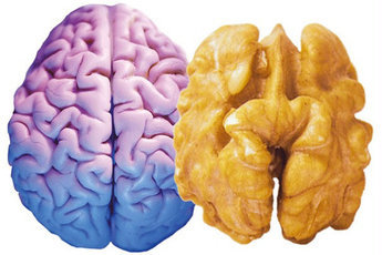 Как улучшить работу мозга народными средствами